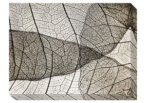 Bardaric Sepia Wall Art